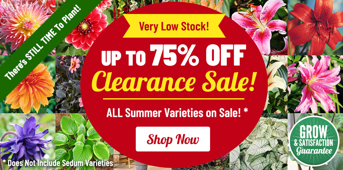 CLEARANCE: Up To 75% OFF Summer Blooms!
