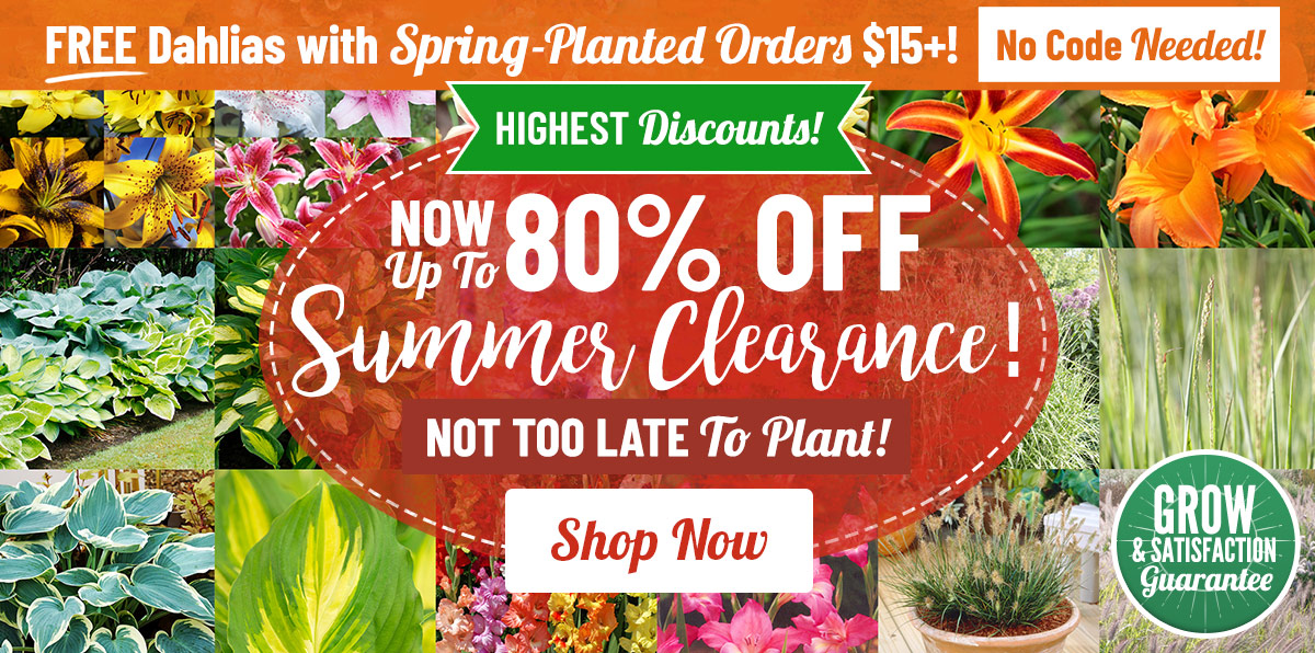 Up To 80% OFF Spring Clearance Sale!