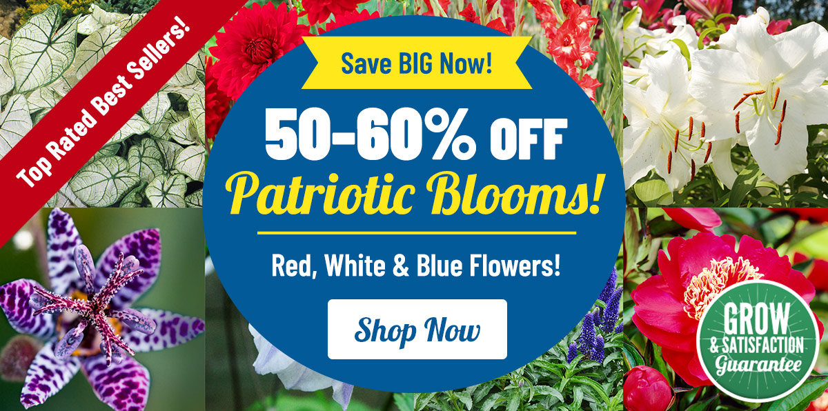 50-60% OFF Red, White, Blue Blooms!