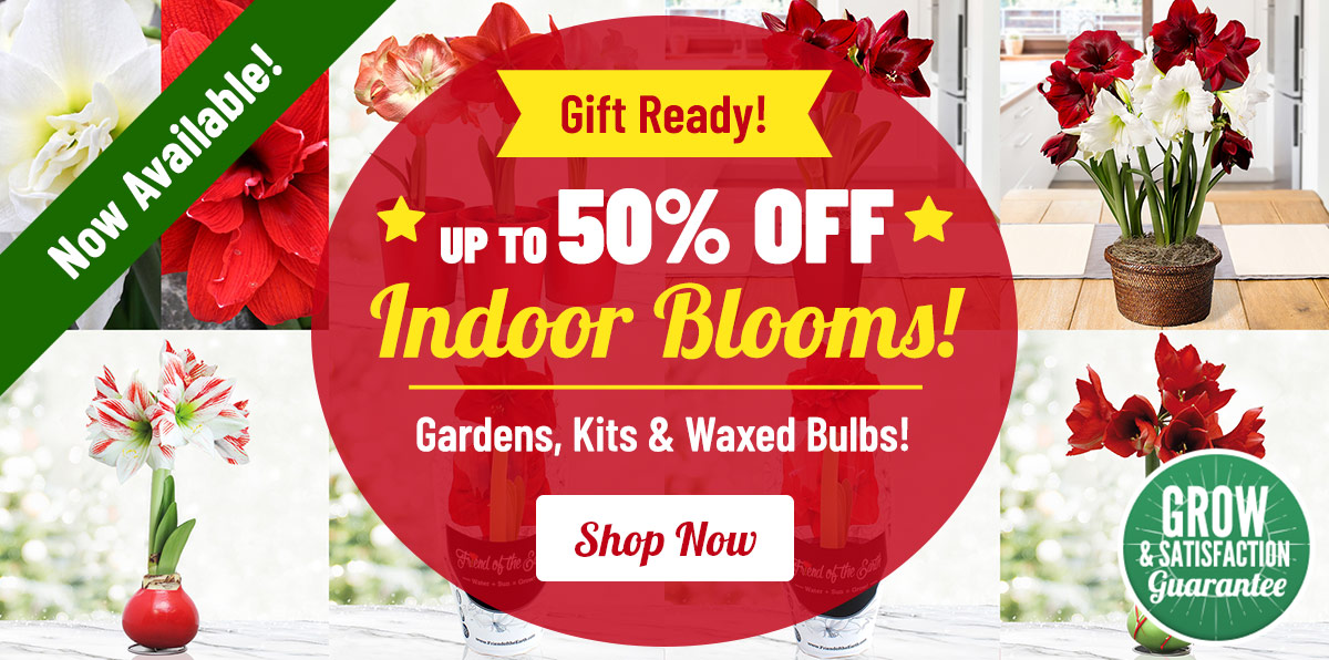 GIFT READY: Indoor Bulb Gardens Up To 50% OFF!