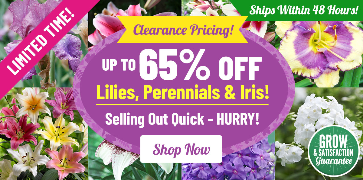 Up To 65% OFF Clearance on Perennials, Lilies & Iris!