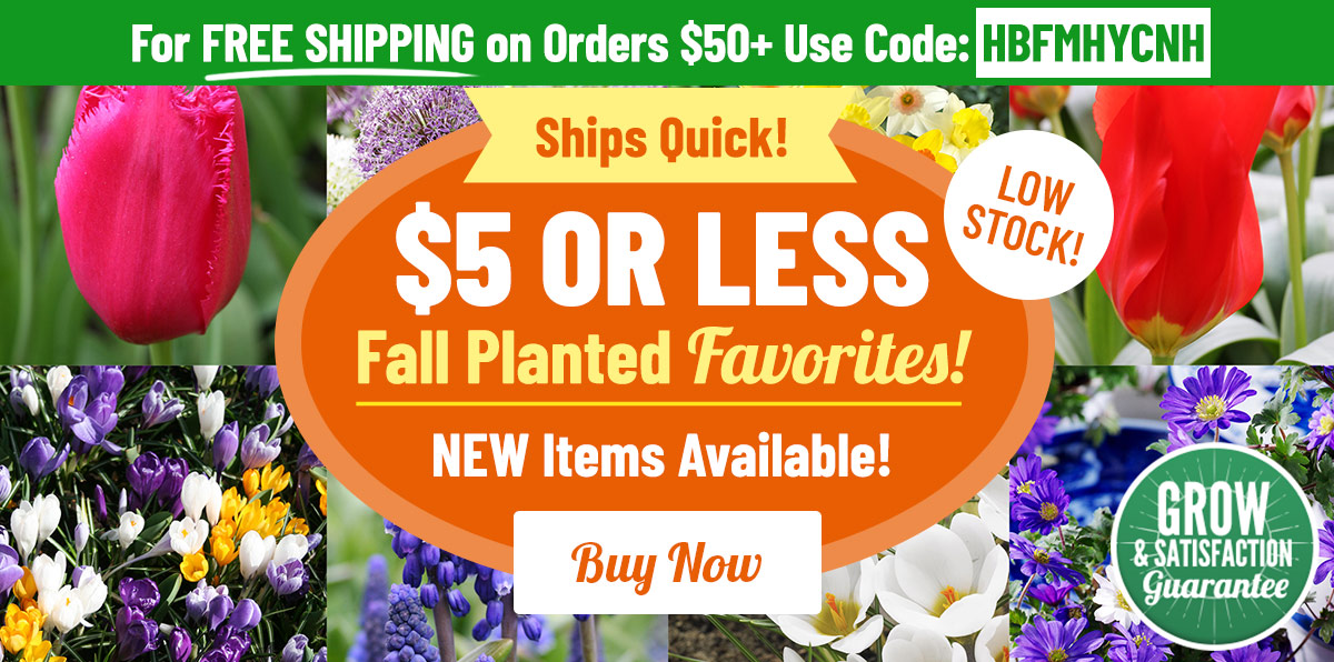 $5 or LESS Fall Planted Favorites!