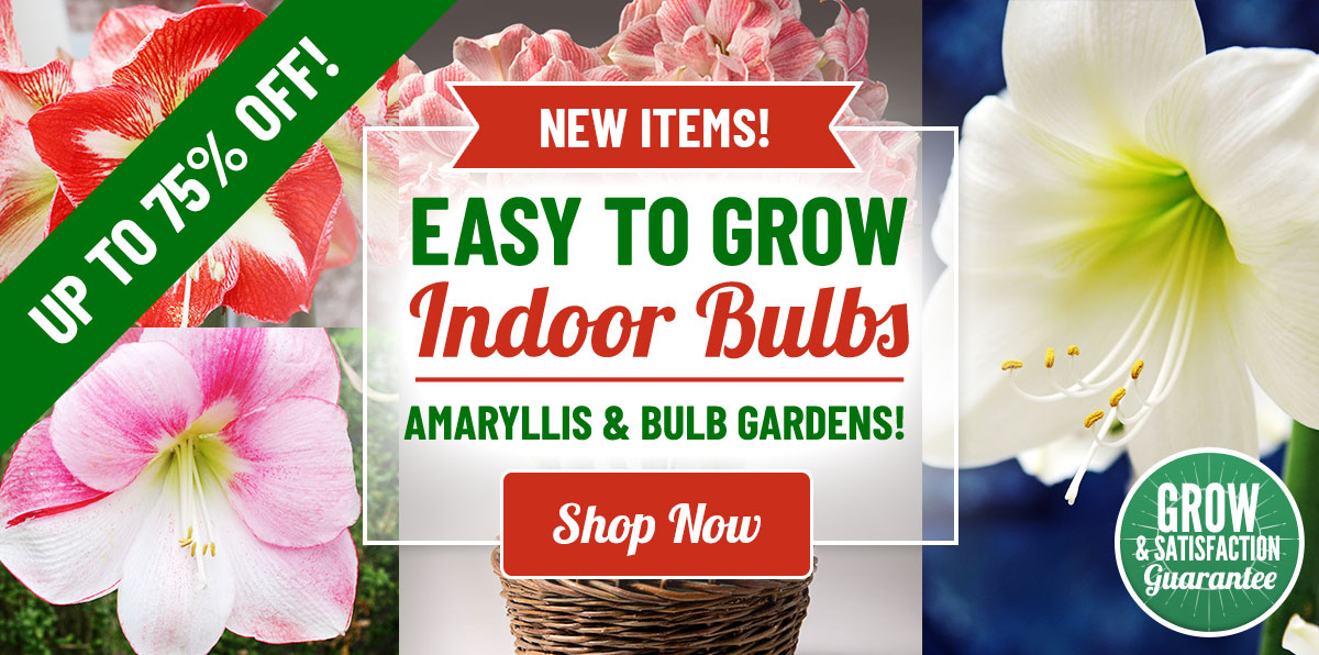 Indoor Bulb Gardens Up To 40% OFF!