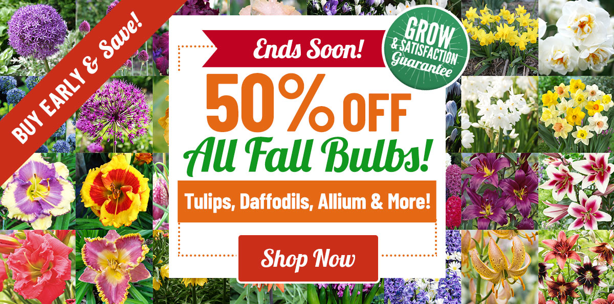 NOW AVAILABLE:  50% OFF ALL Fall Bulbs & Perennials!