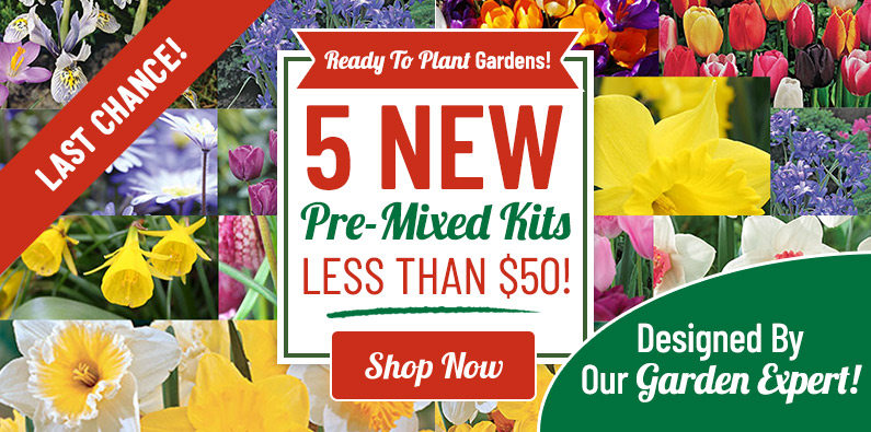 5 NEW Pre-Mixed Kits Under $50!