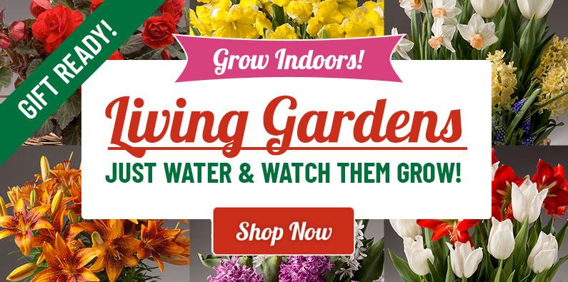 Holland bulb farms indoor bulb gardens the perfect gift idea mightylinksfo