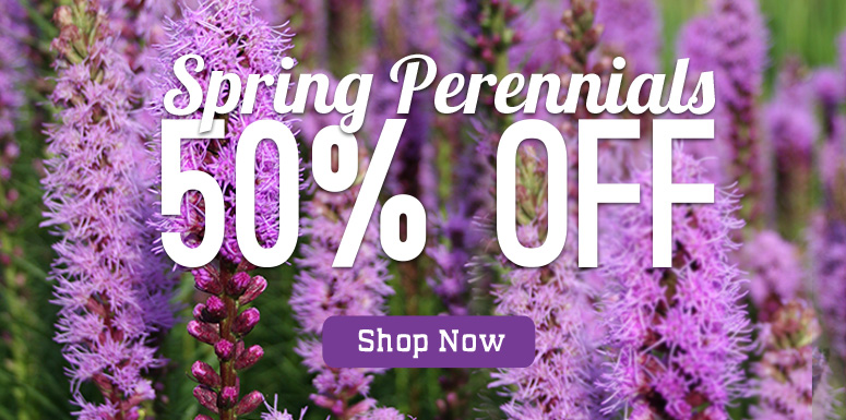 Save 50% OFF All Perennials!